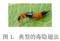 毒隐翅虫致伤诊治规范[团体标准]